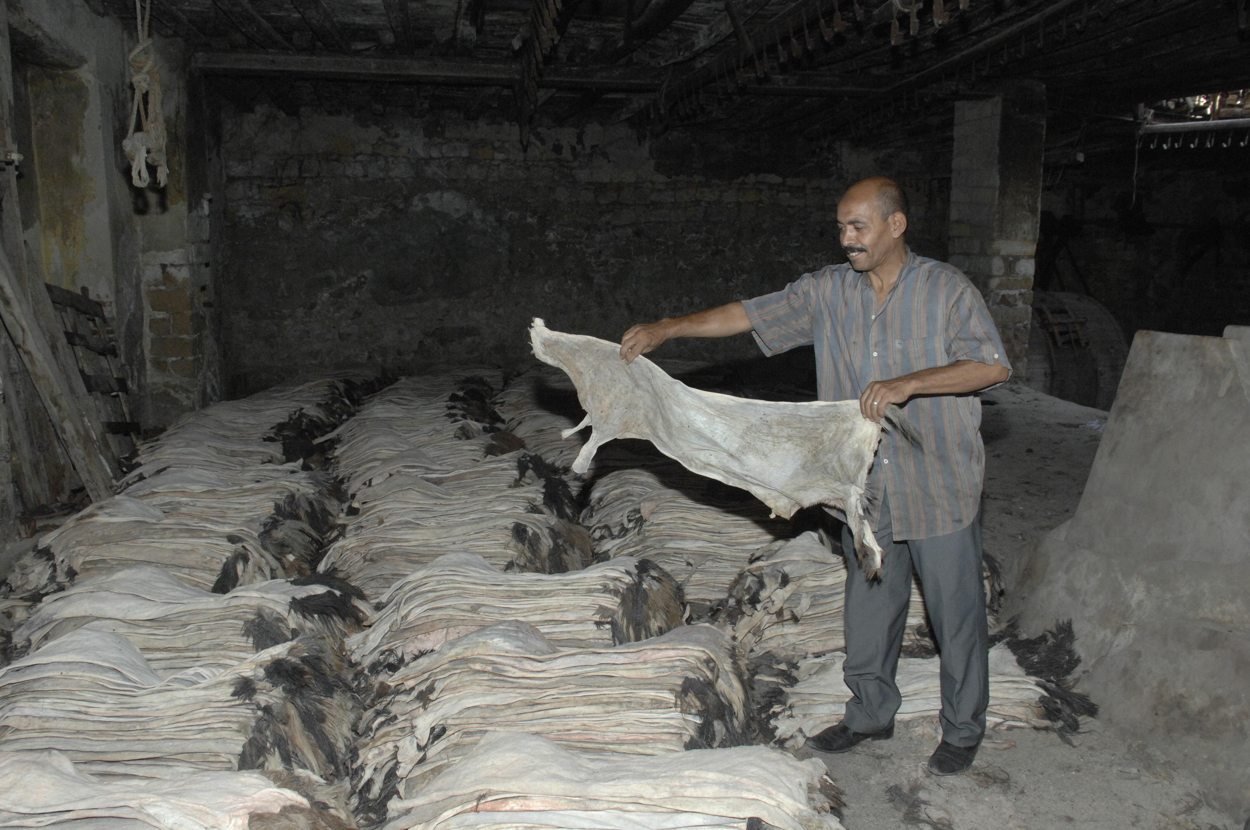 صناعة الجلود في مصر